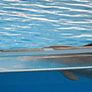 Dolphin Show - National Aquarium In Baltimore Md - 121211 Poster by DC Photographer