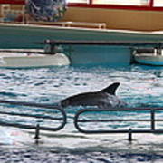 Dolphin Show - National Aquarium In Baltimore Md - 1212115 Poster by DC Photographer