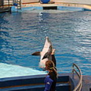 Dolphin Show - National Aquarium In Baltimore Md - 1212145 Poster by DC Photographer