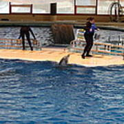 Dolphin Show - National Aquarium In Baltimore Md - 121246 Poster by DC Photographer