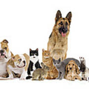 Domestic Mammal Pets Poster