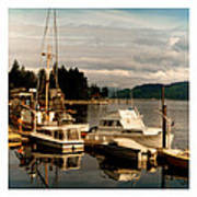Domino At Alderbrook On Hood Canal Poster