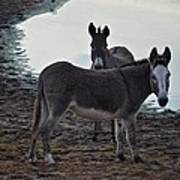 Donkey Pair Poster