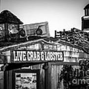 Dory Fishing Fleet Live Crab And Lobster Sign Picture Poster
