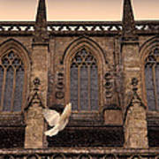 Dove Flying By Church Poster
