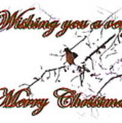 Dove - Snowy Limb - Christmas Card Poster