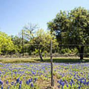 Down Country Bluebonnets Poster