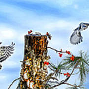 Downy And Titmouse Playing On Lichen Stump Poster