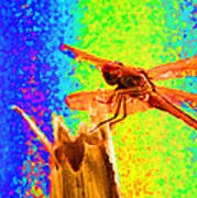 Dragon Fly- Creative Poster