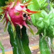 Dragon Fruit Also Know As Pitaya Or Pitahaya Poster