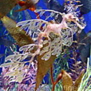 Dragon Sea Horse Poster