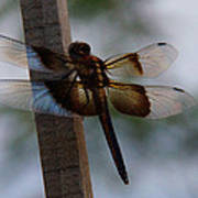 Dragonfly At Rest Poster