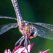 Dragonfly Close Up Poster