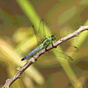 Dragonfly - Common Green Darner Poster