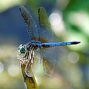Dragonfly Elegance Poster