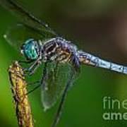 Dragonfly Having Summer Fun Poster