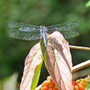 Dragonfly In Early Autumn Poster