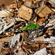 Dragonfly In Mulch Poster