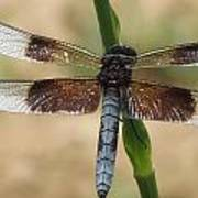 Dragonfly In Summer Poster