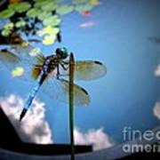 Dragonfly Reflecting On A Beautiful Day Poster
