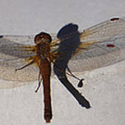 Dragonfly Sees Itself Shadowed II Poster
