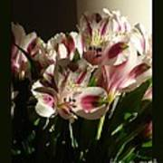 Dramatic Lilies Poster