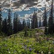 Dramatic Rainier Flower Meadows Poster