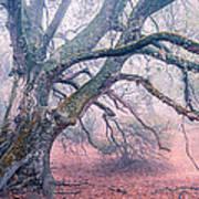 Dream Oak II Color 2 Poster