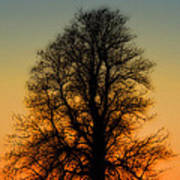 Dream Tree At Sunset Poster
