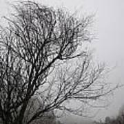 Dreamer Tree Poster