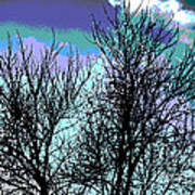 Dreaming Of Spring Through Icy Trees Poster