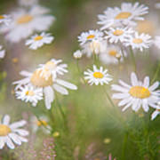 Dreamy Daisies On Summer Meadow Poster