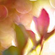 Dreamy Ethereal Pink Tulip Bokeh Circles Poster