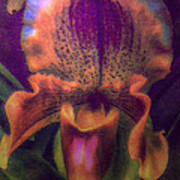 Dreamy Orchid Poster by Jill Balsam