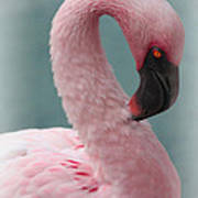 Dreamy Pink Flamingo Poster