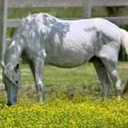 Dreamy Pony Poster