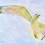 Dreamy Soft Seagull Poster