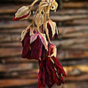 Dried Floral Poster