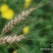 Dried Grass In Soft Focus Poster