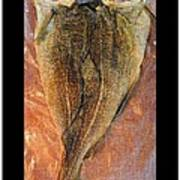 Dried Salted Codfish Back Poster