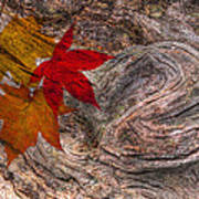 Drifting Autumn Leaves Poster