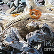 Driftwood Abstract Poster