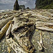 Driftwood And Sea Stacks On Ruby Beach Poster