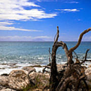 Driftwood Island Poster