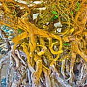 Queen Mariana's Driftwood Poster