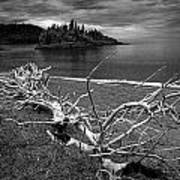 Driftwood On The Shore Near Wawa Ontario Canada Poster
