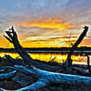 Driftwood Sunset Poster