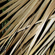 Dry Palm Leaves Poster