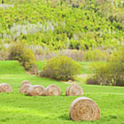Dry Hay Bales In Spring Farm Field Maine Poster