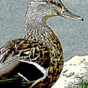 Duck Art Tribal Mallard Poster